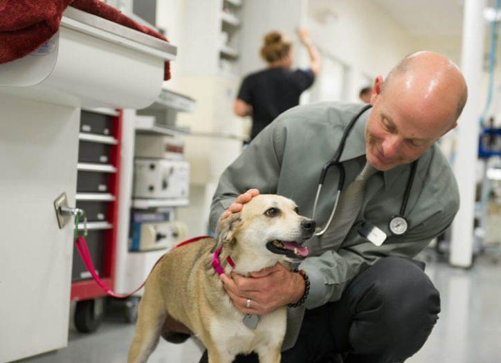 Veterinary Cancer Specialist In Iowa